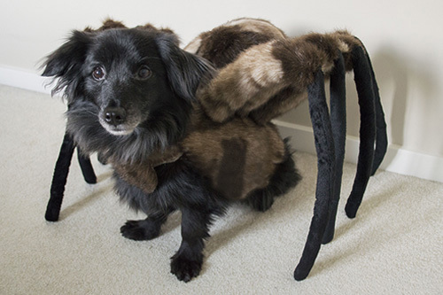 Made from faux fur wire and lots of poly stuffing this Halloween costume was inspired by the very silly prank Mutant Giant Spider Dog. & s p i d e r : ( f o r d o g s ) - MK soft product